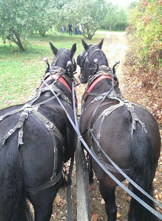 Horse Drawn Hayrides | Fall Hayrides | Summer Hayrides