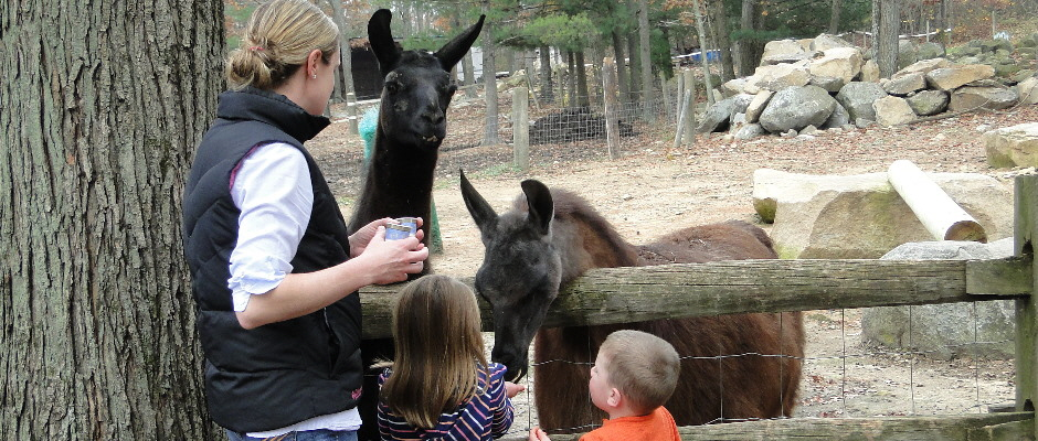 Chepachet Farms Petting Zoo | Llamas | Goats