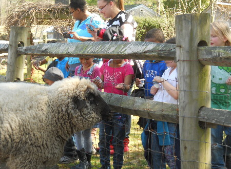 Chepachet Farms Petting Zoo | Sheep